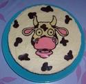 taureau et vache - Page 2 S6300616