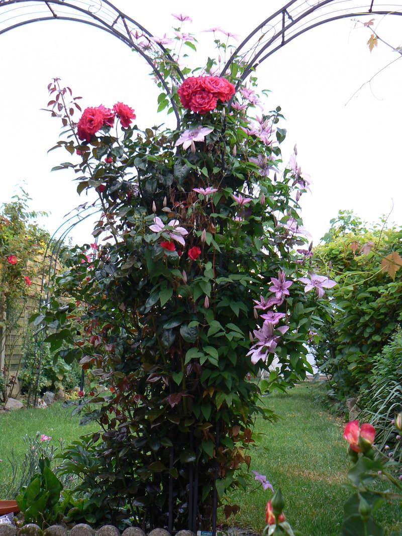 Les Jardins d'Athel Loren. 4mai_210