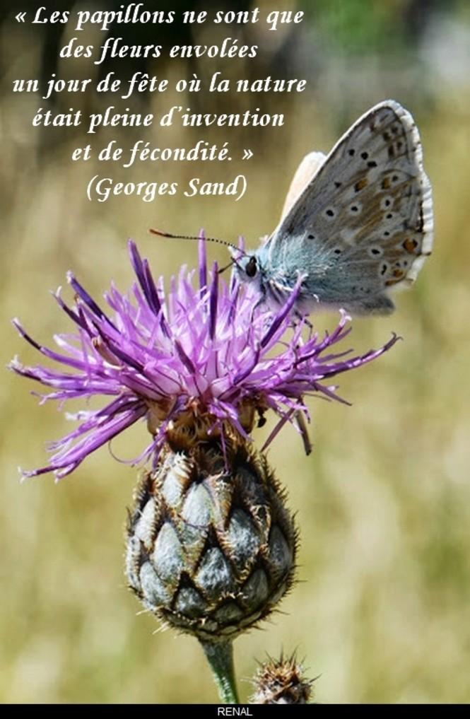 Le monde merveilleux des insectes - Page 2 Papill20