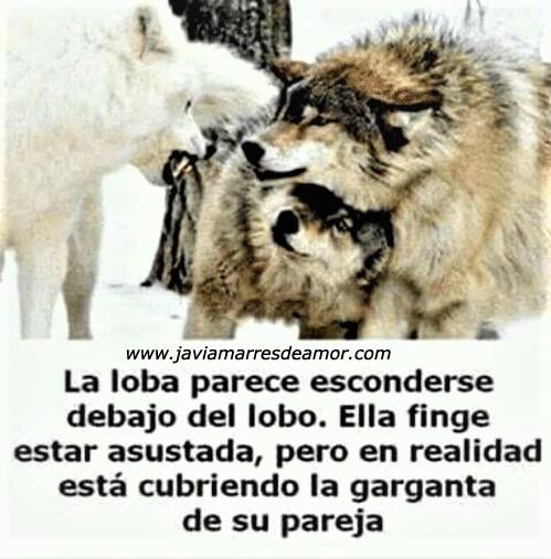 Manual de como tratar a una mexicana La-lob10