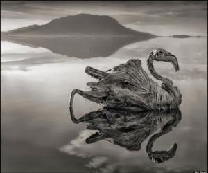 kush - Liqeni i vdekjes, kush e prek, vdes Liqeni10