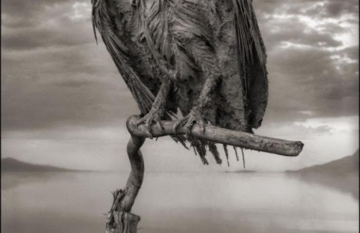 kush - Liqeni i vdekjes, kush e prek, vdes Liqeni14
