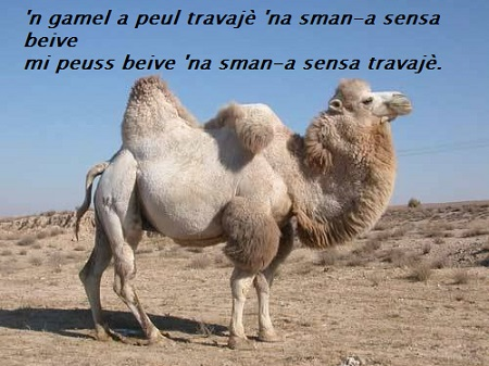 Pillole di saggezza - Pagina 2 Camel10