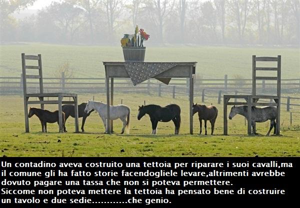 Strane.....news - Pagina 3 Cavall10