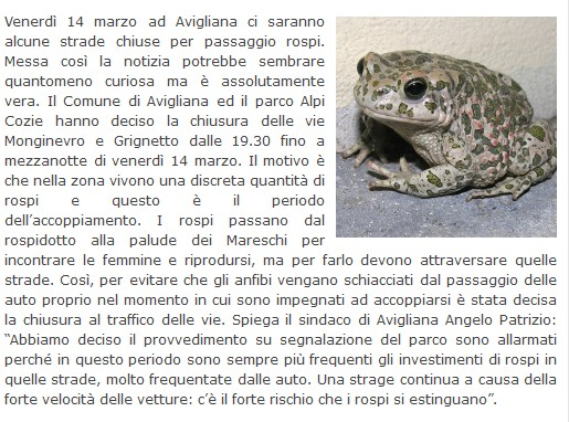 The Other news - Pagina 3 Rospi10