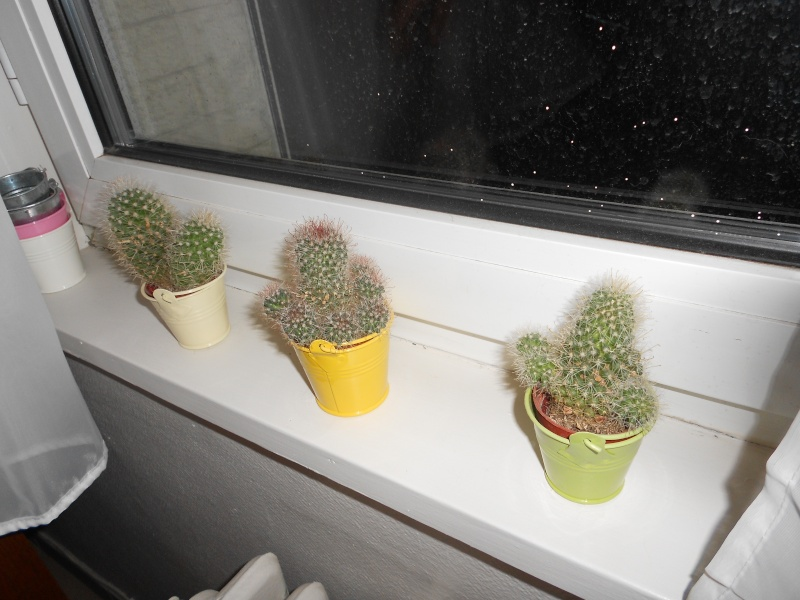 amateurs de cactus et plantes ?  Dscn7811