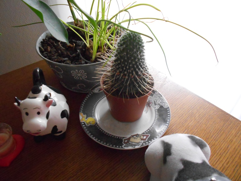 amateurs de cactus et plantes ?  Dscn7812