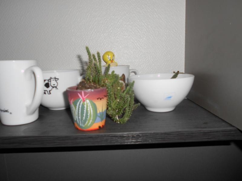 amateurs de cactus et plantes ?  Dscn7816