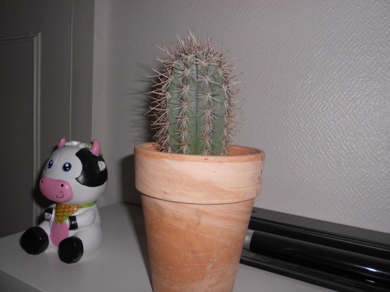 amateurs de cactus et plantes ?  Dscn7817