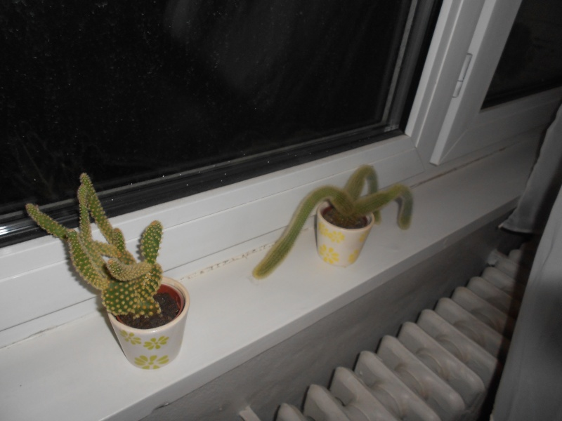 amateurs de cactus et plantes ?  Dscn7819