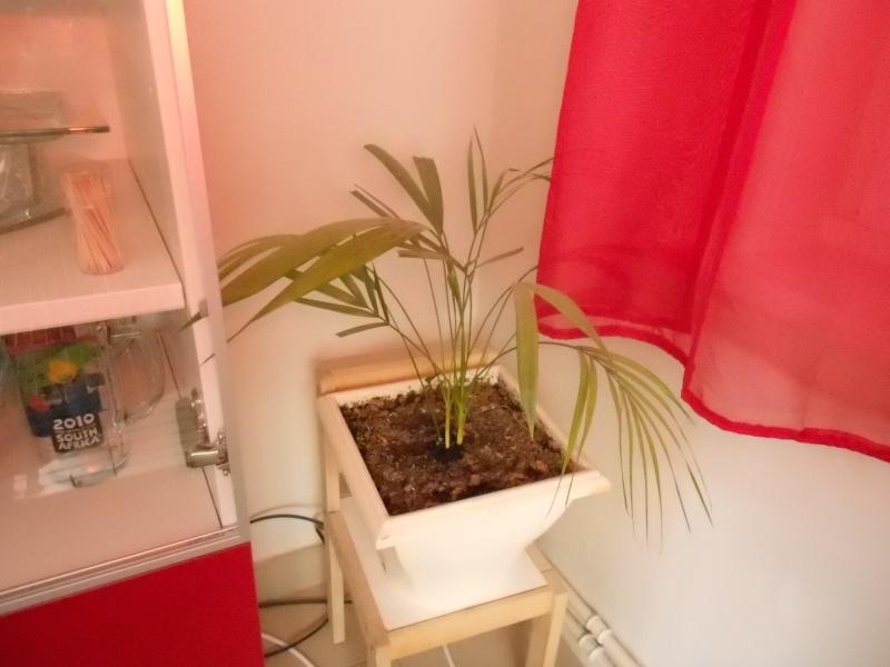 amateurs de cactus et plantes ?  Dscn7821