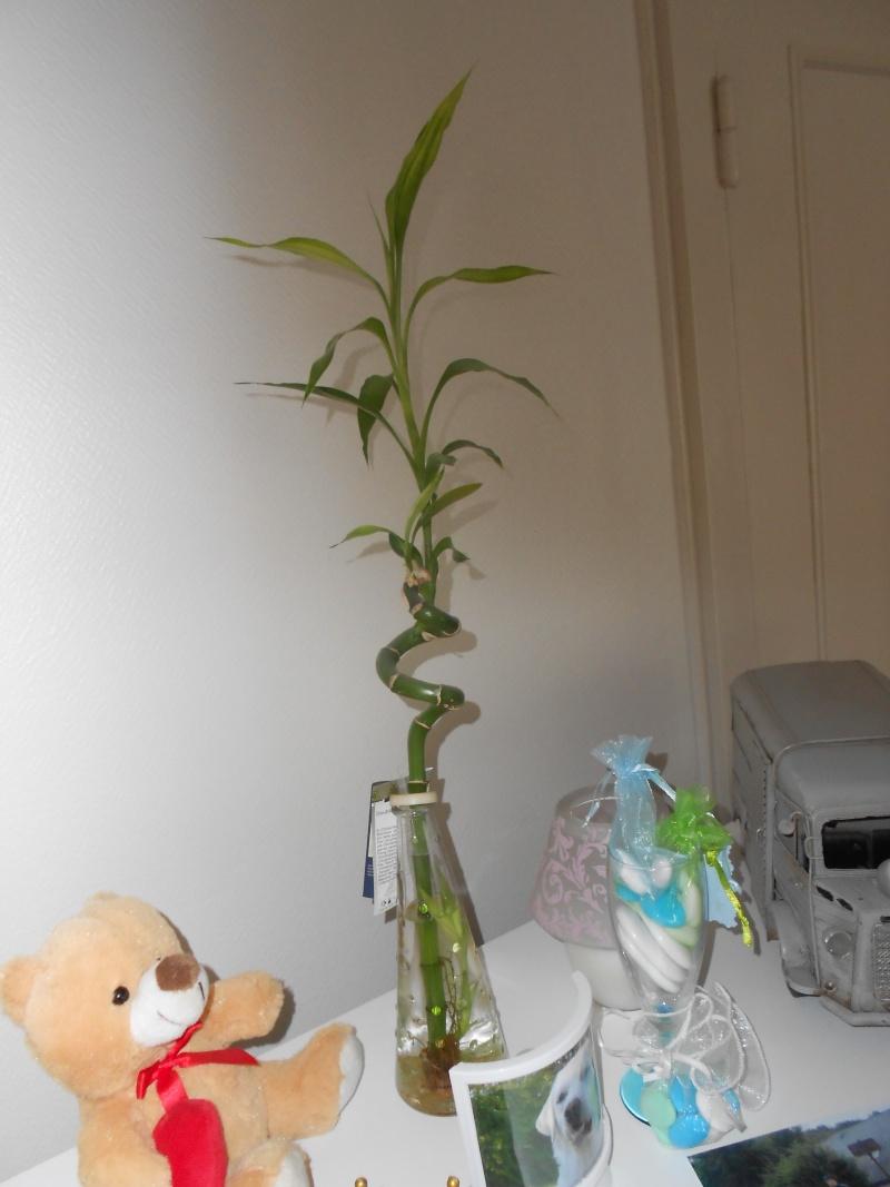 amateurs de cactus et plantes ?  Dscn7822