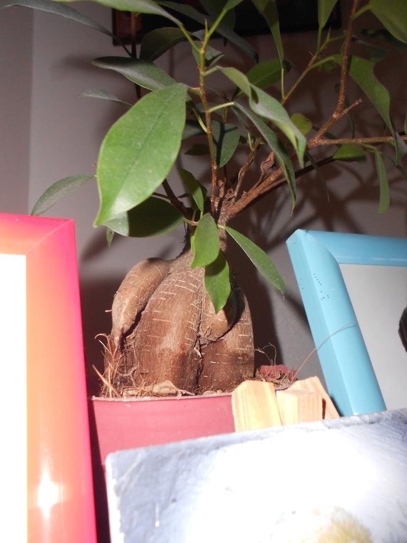 amateurs de cactus et plantes ?  Dscn7823
