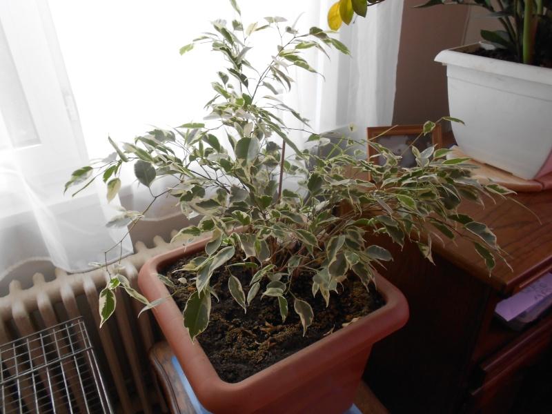 amateurs de cactus et plantes ?  Dscn7824