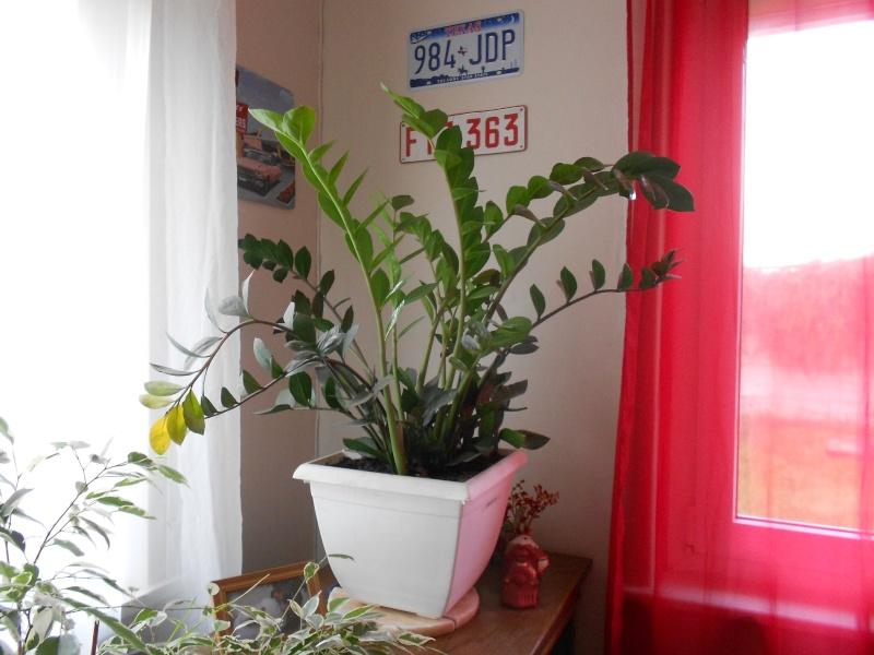 amateurs de cactus et plantes ?  Dscn7825