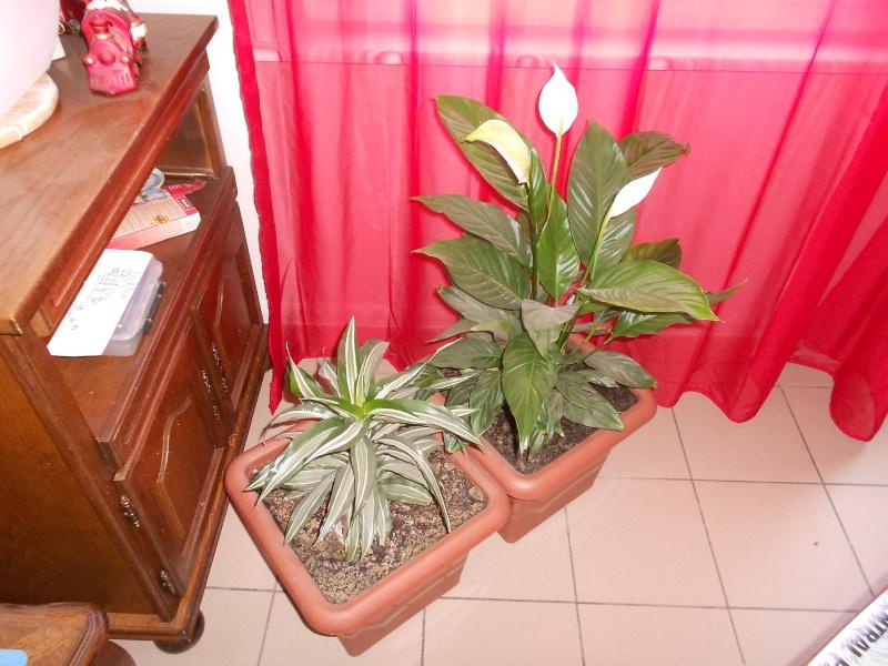 amateurs de cactus et plantes ?  Dscn7826