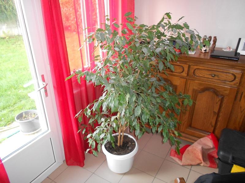 amateurs de cactus et plantes ?  Dscn7827