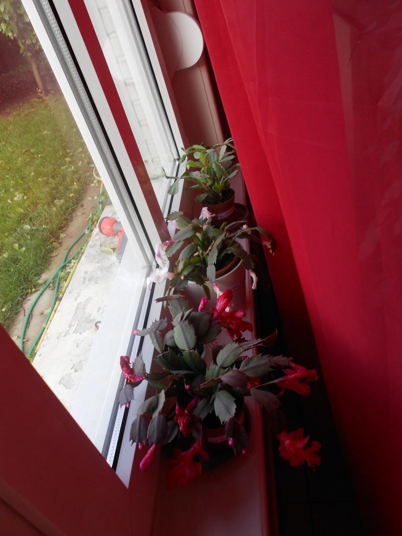 amateurs de cactus et plantes ?  Dscn7828