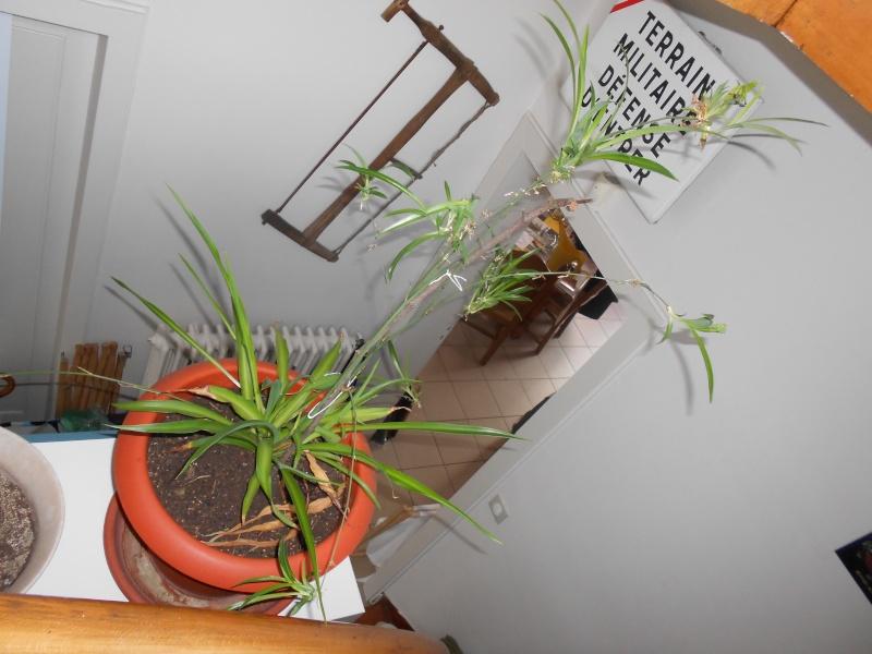 amateurs de cactus et plantes ?  Dscn7829