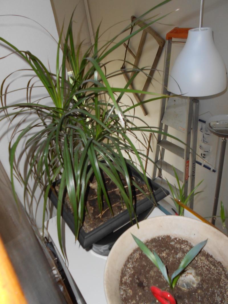 amateurs de cactus et plantes ?  Dscn7831