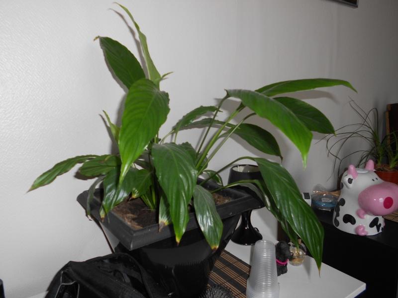 amateurs de cactus et plantes ?  Dscn7832