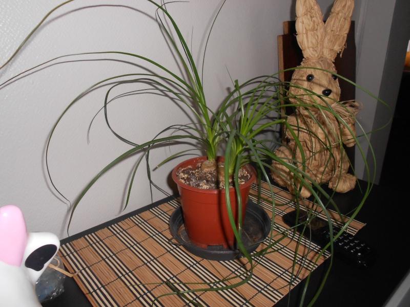 amateurs de cactus et plantes ?  Dscn7833