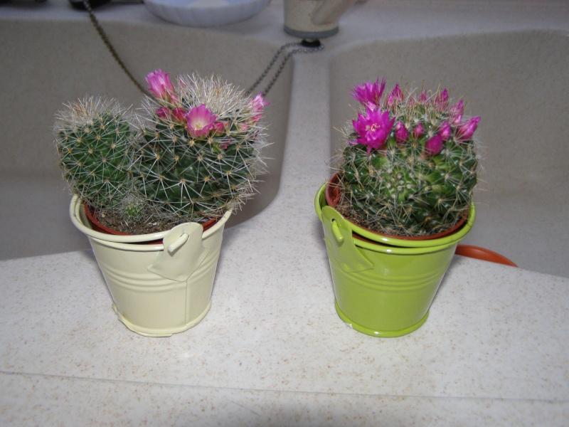 amateurs de cactus et plantes ?  - Page 5 P2260110