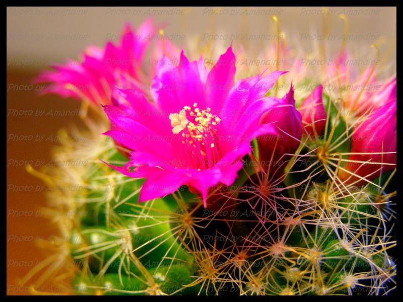 amateurs de cactus et plantes ?  - Page 5 P2270010