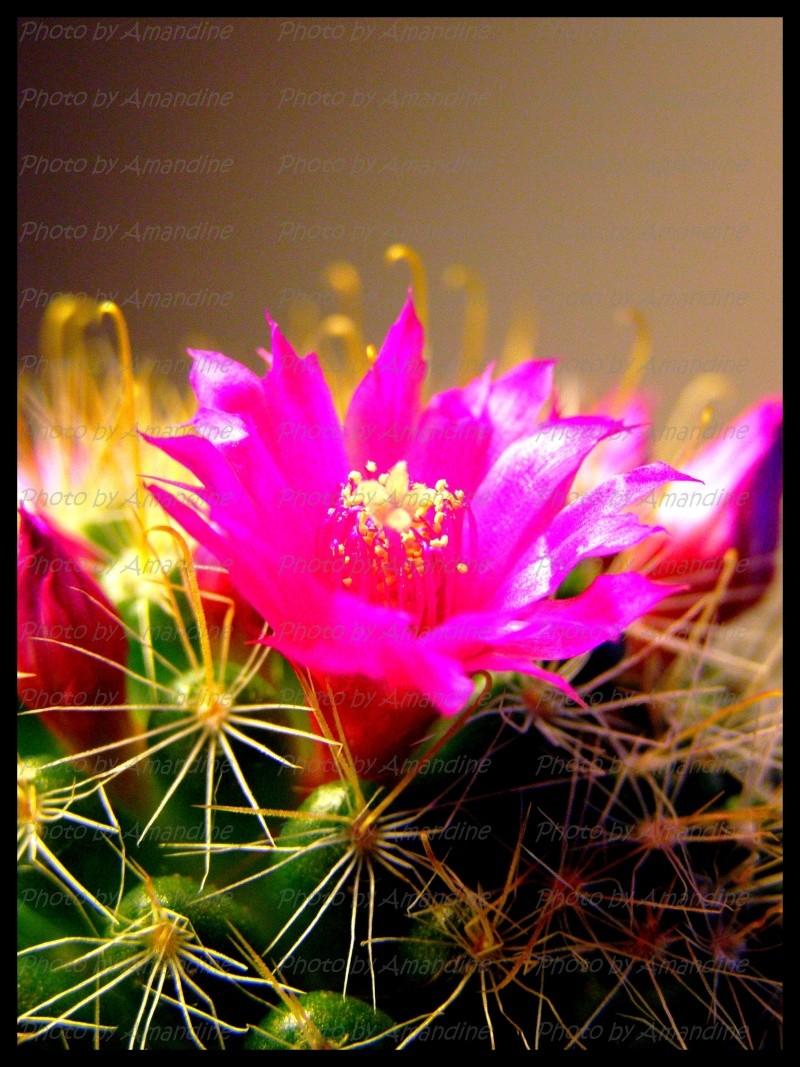 amateurs de cactus et plantes ?  - Page 5 P2270011
