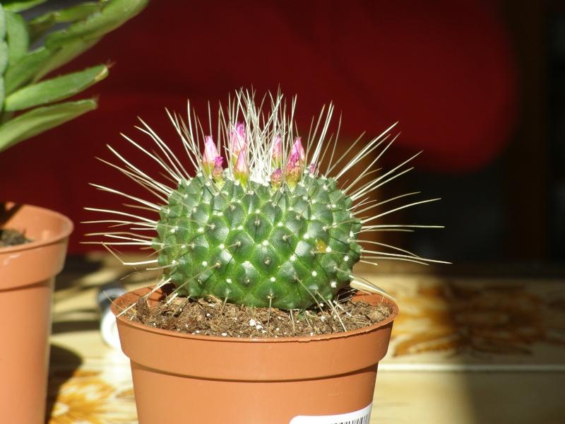 amateurs de cactus et plantes ?  - Page 5 P4170010