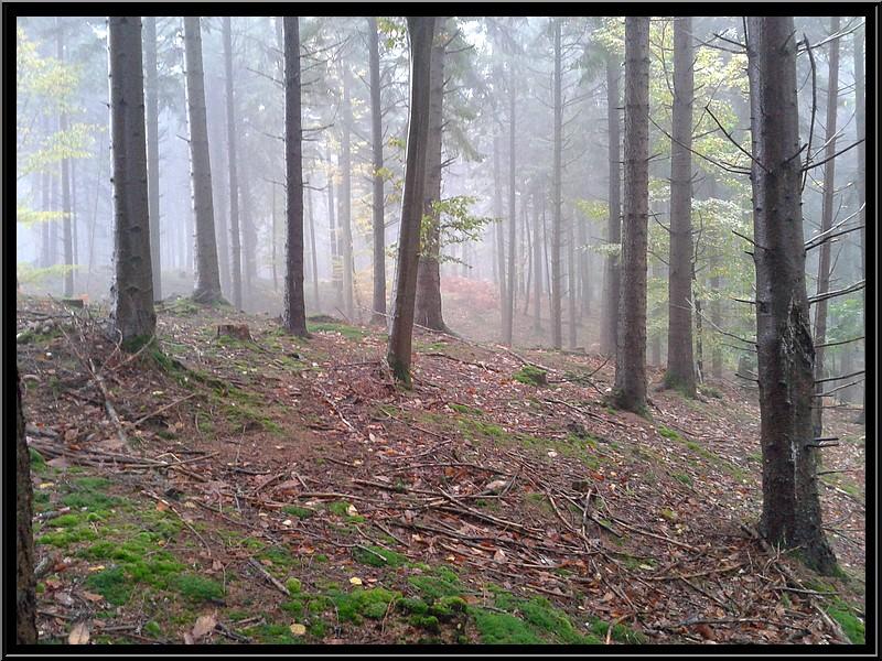 dans la brume 20131110