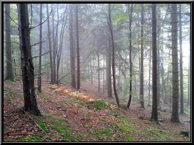 dans la brume 20131111