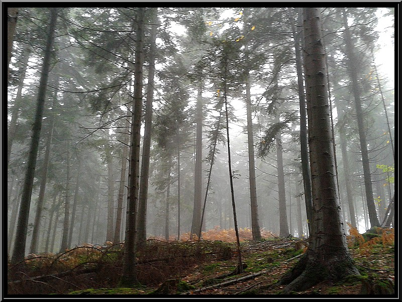 dans la brume 20131112