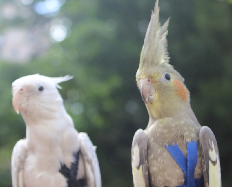 Mes photographies d'animaux Img_9210
