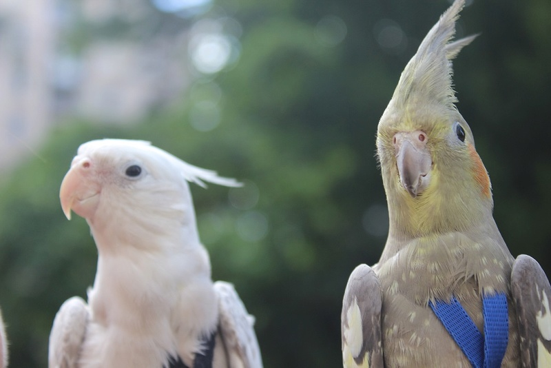 Mes photographies d'animaux Img_9211