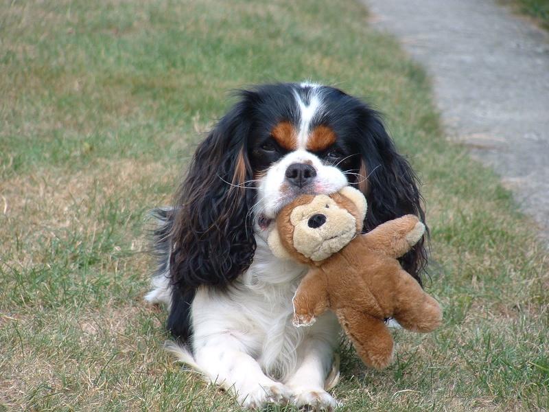 Le pire qui ait été dit sur mon chien... - Page 13 2003_010
