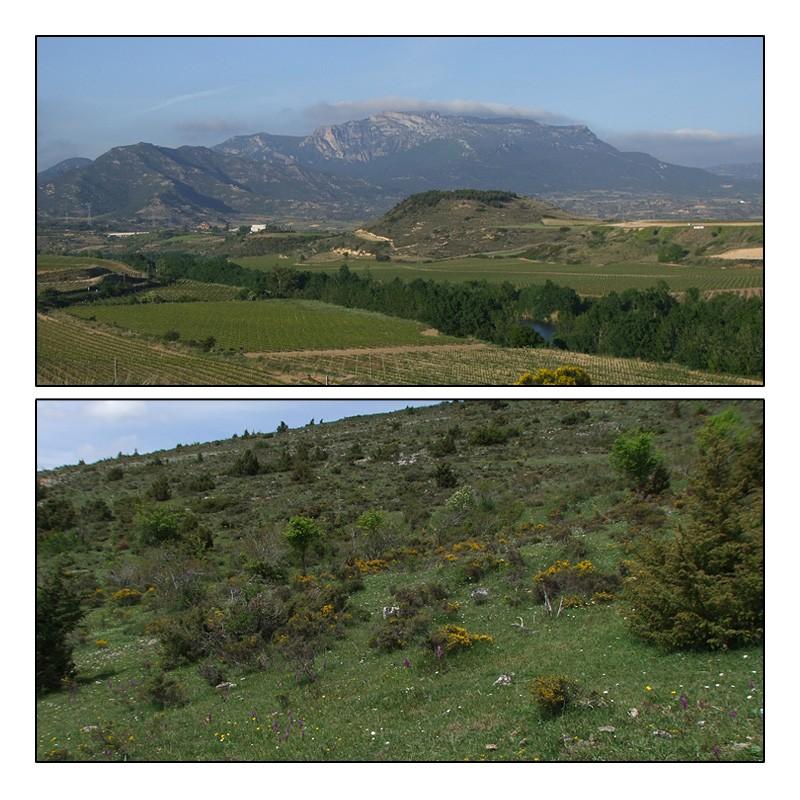 La Rioja - Burgos - Navarre (9-12 mai 2014) Aperau13