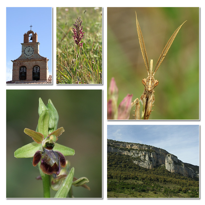 La Rioja - Burgos - Navarre (9-12 mai 2014) Floril10