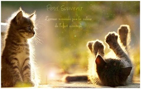 Petit Souvenir - Chaton - Aube Petit_11