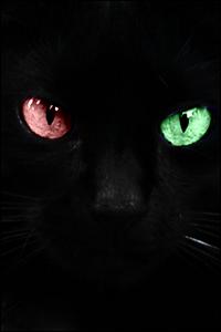 [Libre] Raven ♂ Solitaire 20 Lunes [Total] Vava_r10
