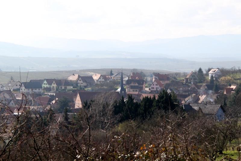 Sur les hauteurs de Wangen en mars 2014 Img_9827