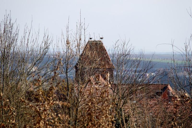 Sur les hauteurs de Wangen en mars 2014 Img_9835