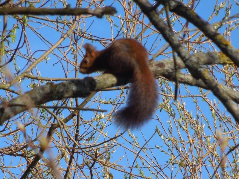 Wangen : gros plan sur le chipeur de noix Unname44