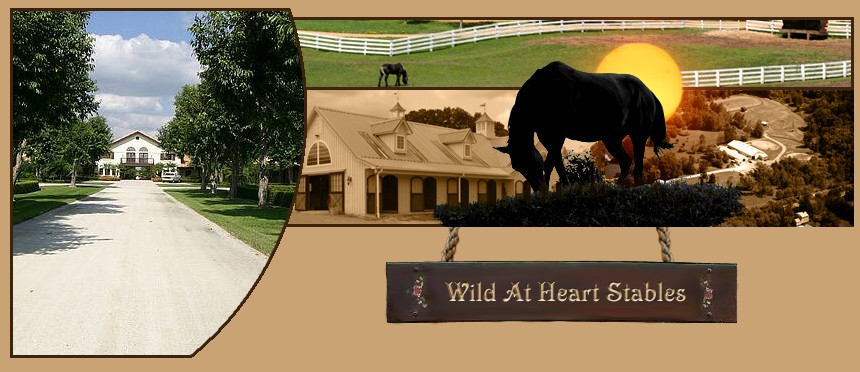 Wild At Heart Stables