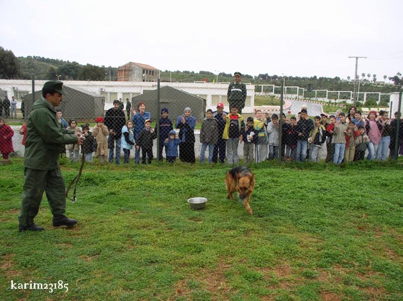 الكلاب البوليسية C11