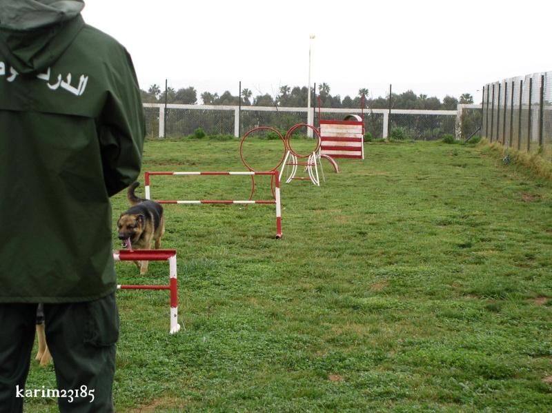 الكلاب البوليسية E10