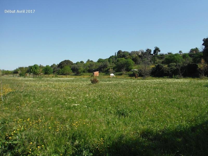 JdB de 4 hectares de pâtures dans le SUD : Avril 2019, et toujours la sécheresse... - Page 4 10009p10