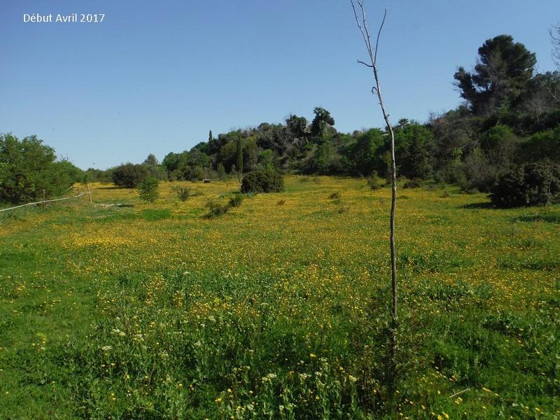 JdB de 4 hectares de pâtures dans le SUD : Avril 2019, et toujours la sécheresse... - Page 4 1009pa10