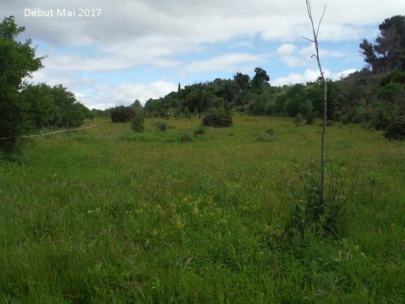 JdB de 4 hectares de pâtures dans le SUD : Avril 2019, et toujours la sécheresse... - Page 4 1010pa10