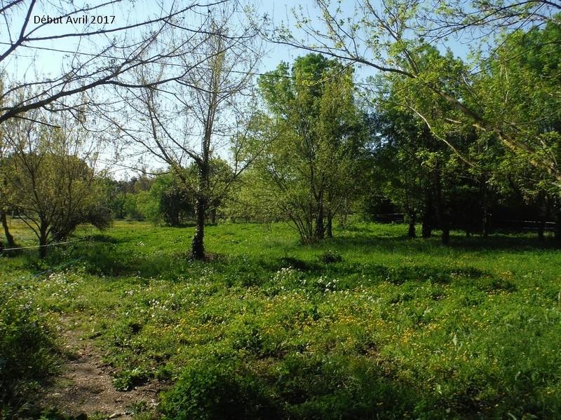 JdB de 4 hectares de pâtures dans le SUD : Avril 2019, et toujours la sécheresse... - Page 4 11009p10